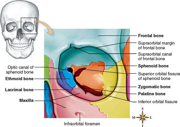 Skeletal System | Basicmedical Key