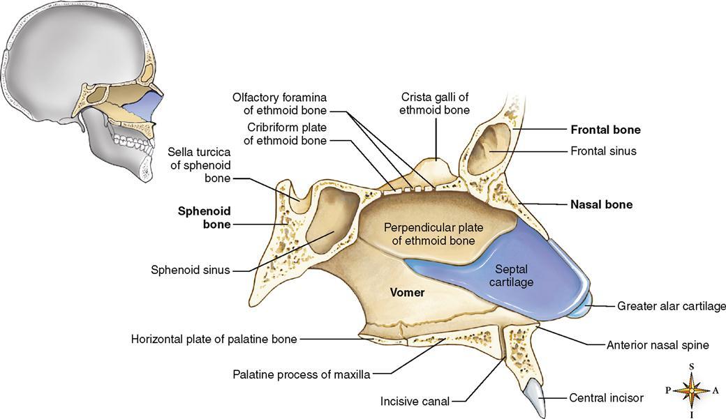 Sphenoid Ethmoid Bone Kefei04