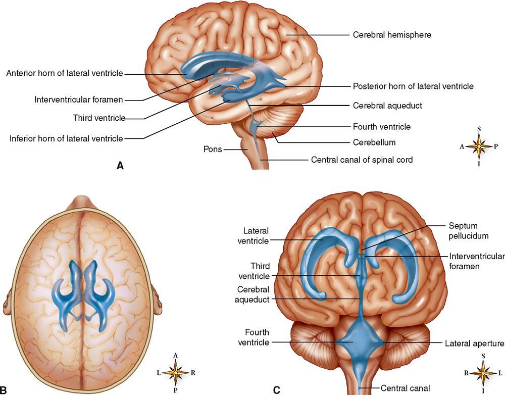 Central nervous system basicmedical key f500256f14 04 9780323096003g ccuart Choice Image