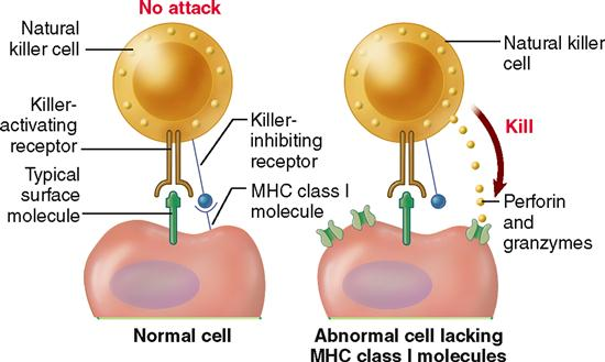 Cancer cells can be programmed to become normal again