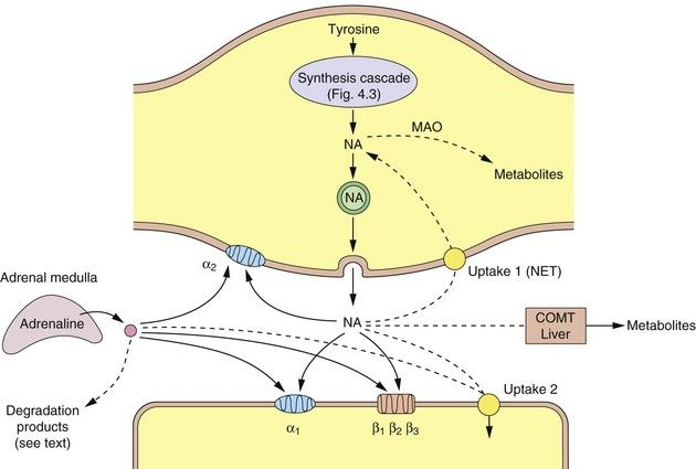 serotonin a classic neurotransmitter linked with Several neurotransmitters such as serotonin, norepinephrine.