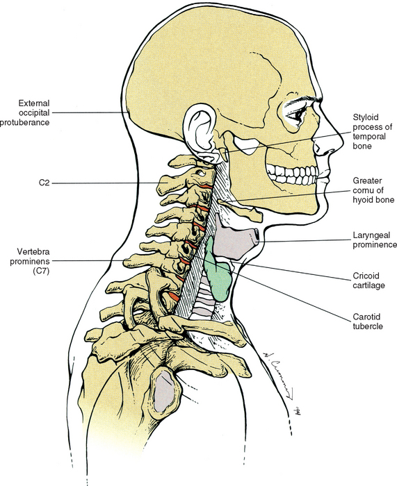 surface anatomy of the back and vertebral levels of clinically, Human Body