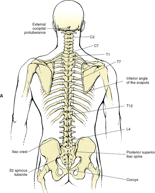 Surface Anatomy of the Back and Vertebral Levels of Clinically ...