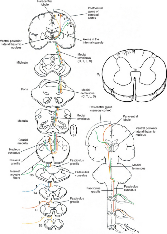 Neuroanatomy Of The Spinal Cord