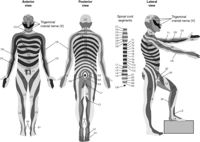 intraspinal analgesia  epidural and intrathecal