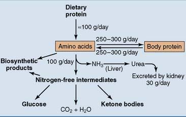 Amino Acid Metabolism | Basicmedical Key