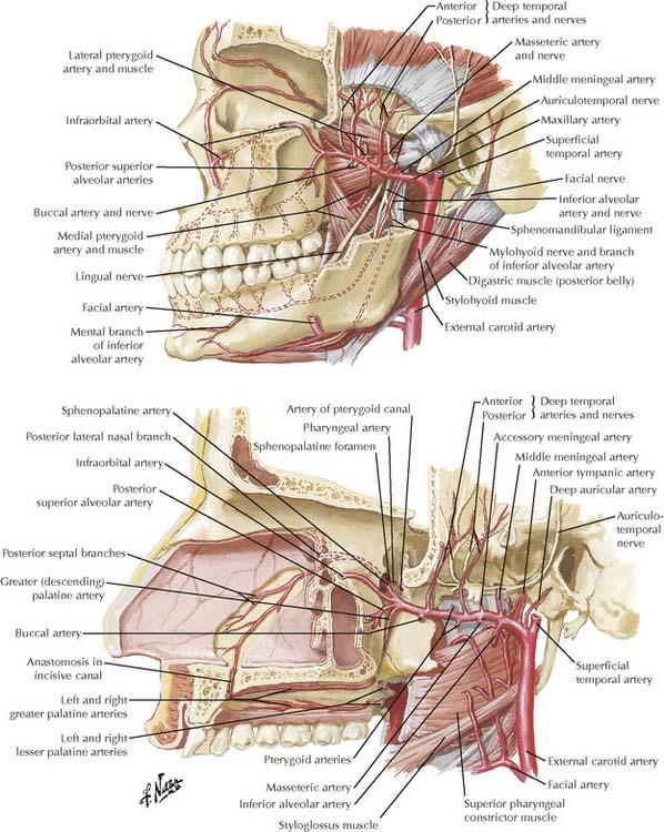 The Head | Basicmedical Key
