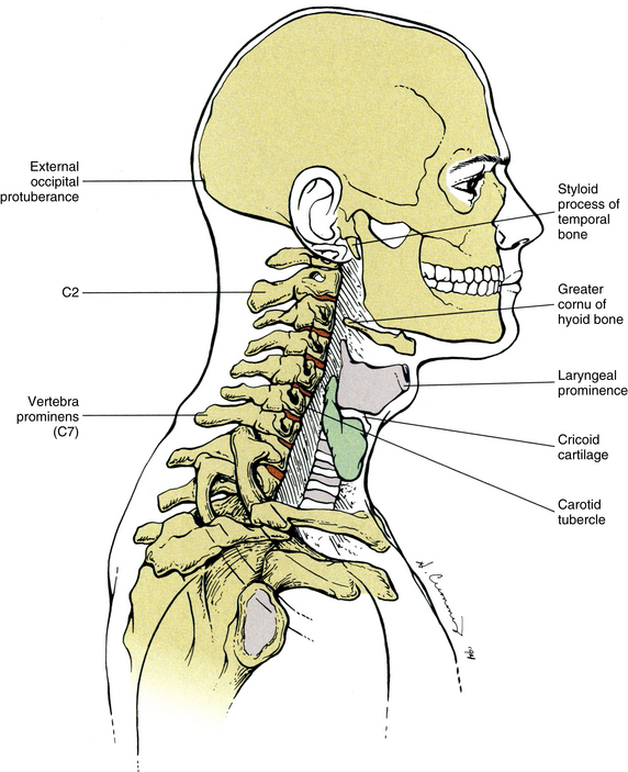 Surface Anatomy Of The Back And Vertebral Levels Of Clinically