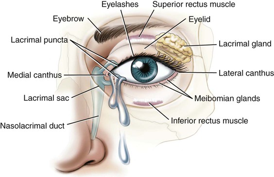 B F on Basic Eye Diagram