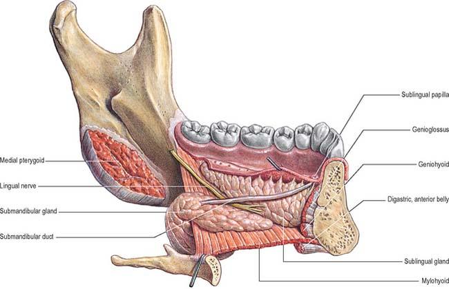 Oral cavity | Basicmedical Key