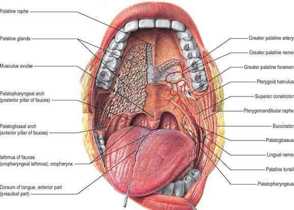 Oral Muscles 37