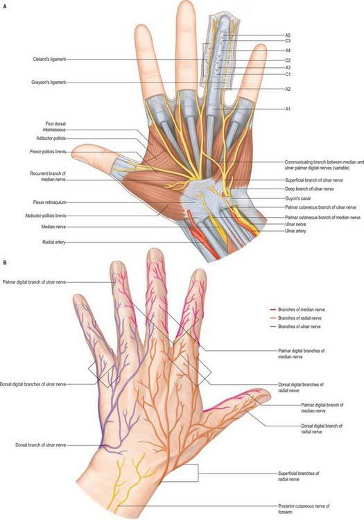 Wrist and hand | Basicmedical Key