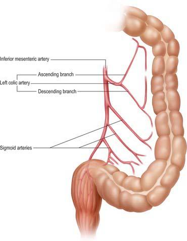 Large intestine | Basicmedical Key