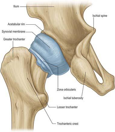 Hip Basicmedical Key
