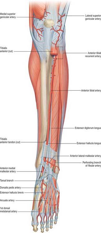 Leg Basicmedical Key