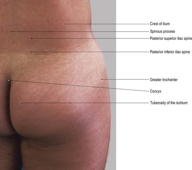 The Lower Limb Basicmedical Key