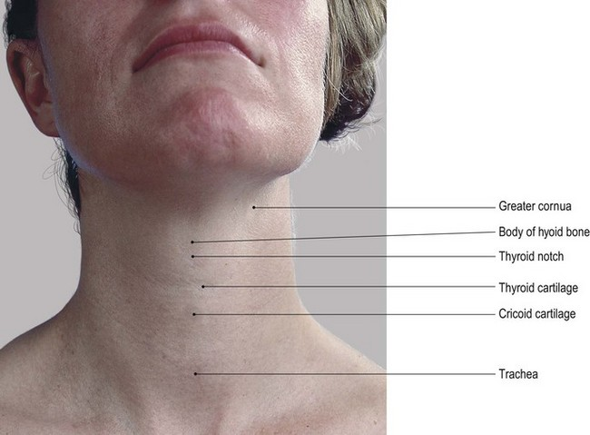 The Head And Neck Basicmedical Key
