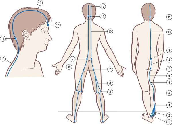 The Superficial Back Line Basicmedical Key