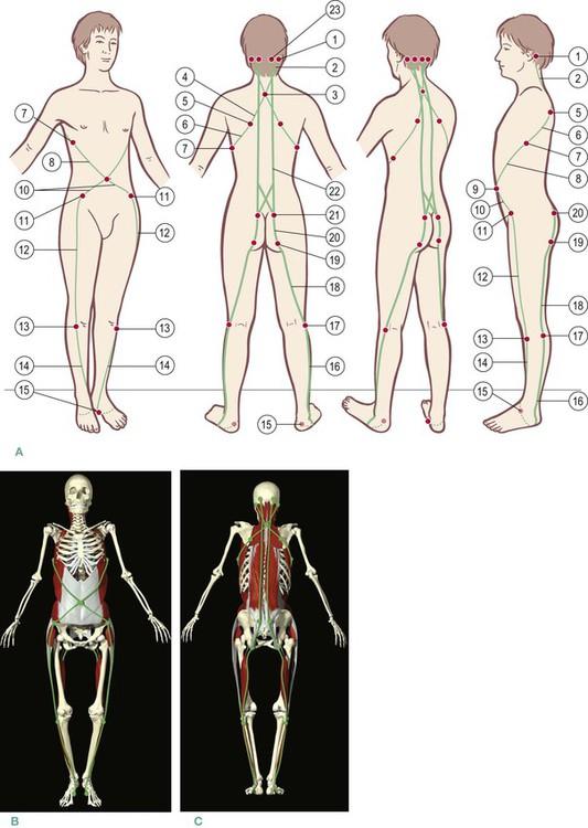 The Spiral Line Basicmedical Key