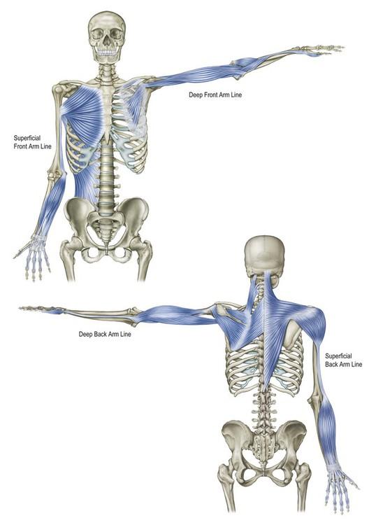 The Arm Lines Basicmedical Key
