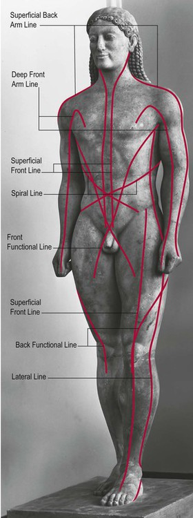 Anatomy Trains In Training Basicmedical Key