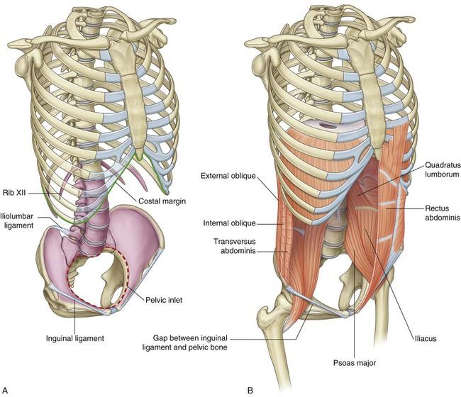 Abdomen Basicmedical Key