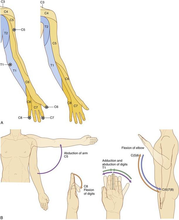 Upper Limb | Basicmedical Key