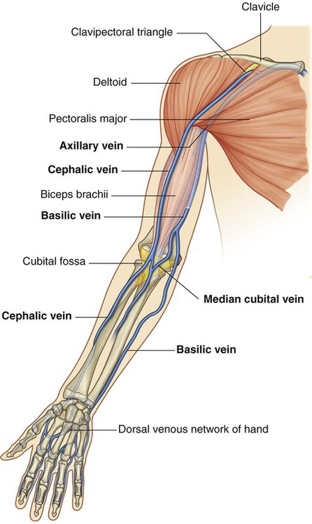 upper limb | basicmedical key, Cephalic vein