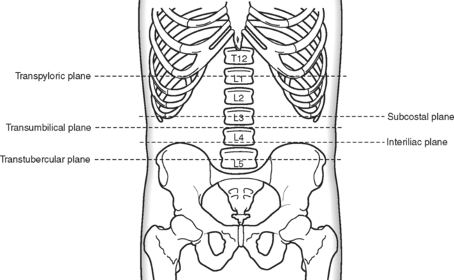 Subcostal Illustrations | Our Top 36 Subcostal Stock Art ...