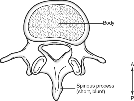 The Vertebral Column Spinal Cord And Neck