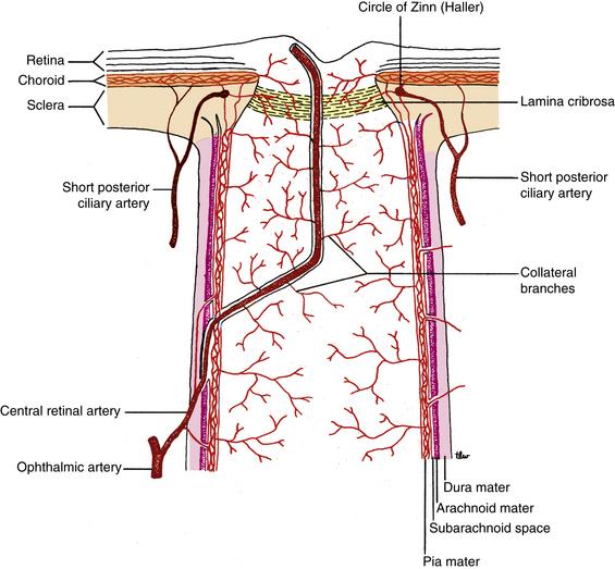 Orbital Blood Supply Basicmedical Key