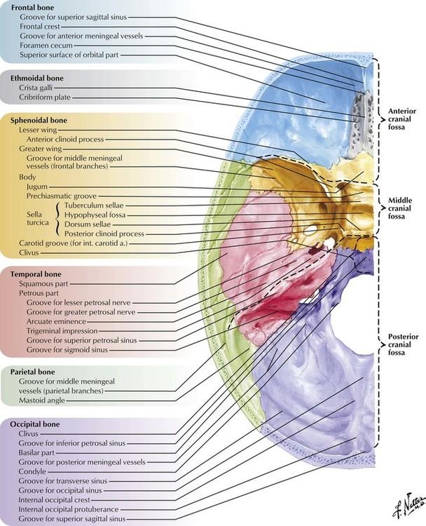 1: head and neck | basicmedical key, Sphenoid