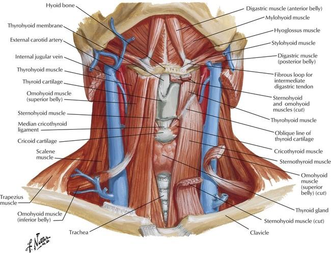 1: Head and Neck | Basicmedical Key