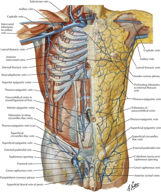 4: Abdomen | Basicmedical Key