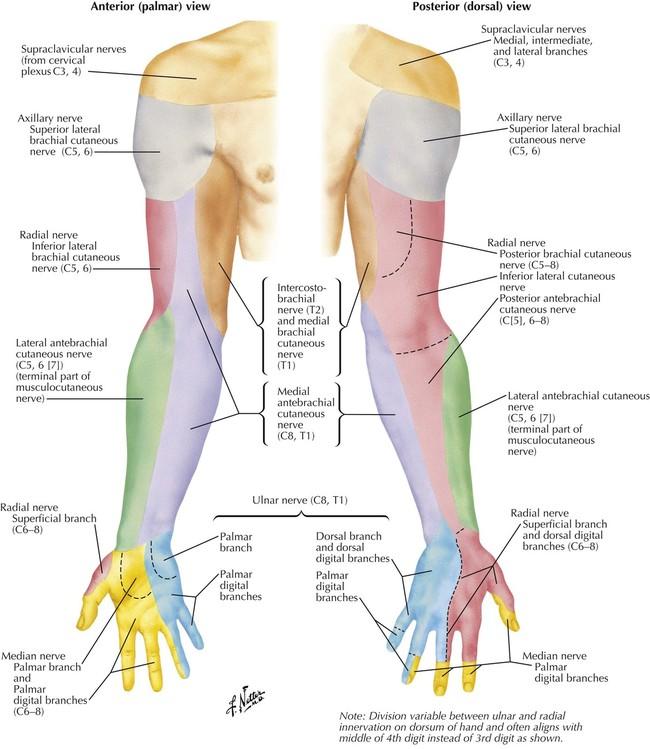 6: Upper Limb | Basicmedical Key