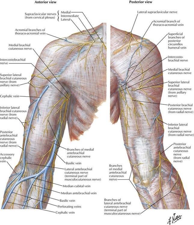 6 Upper Limb Basicmedical Key