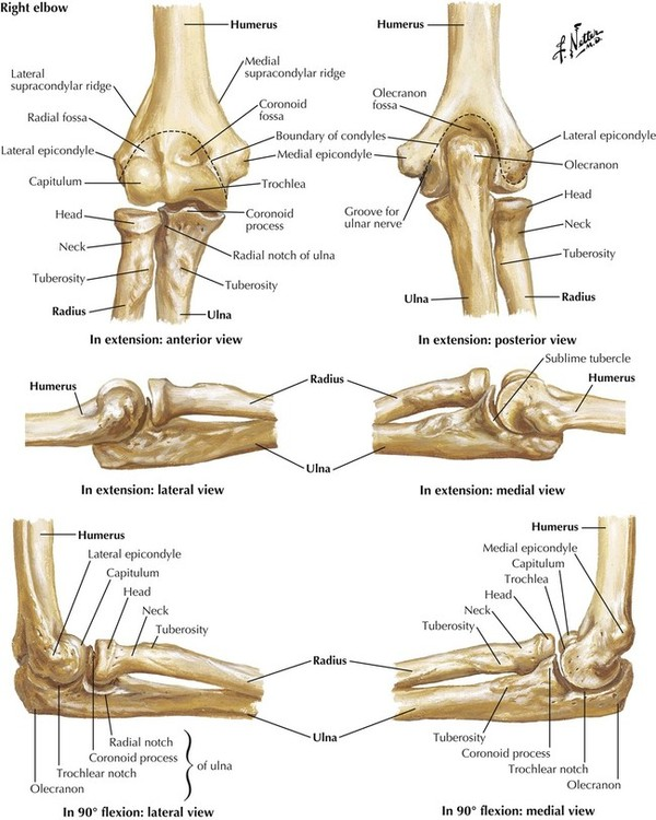 6 Upper Limb Basicmedical Key