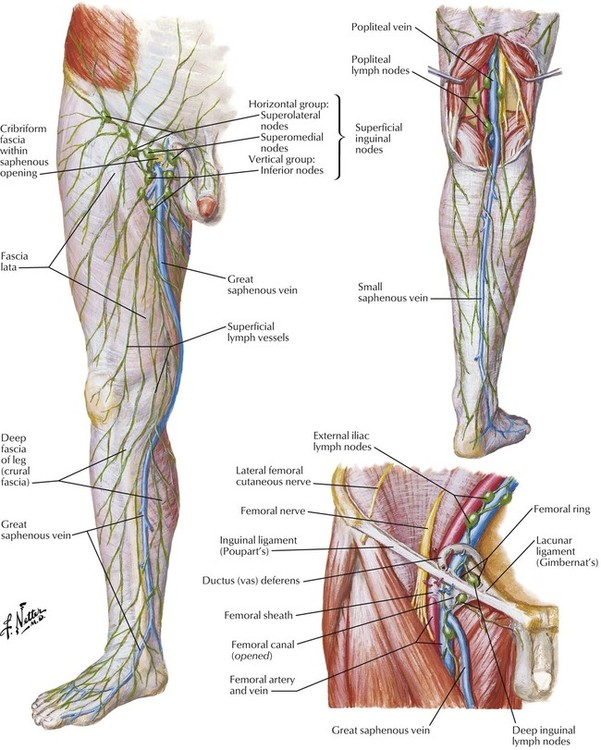 how to remember nerves of lower limb