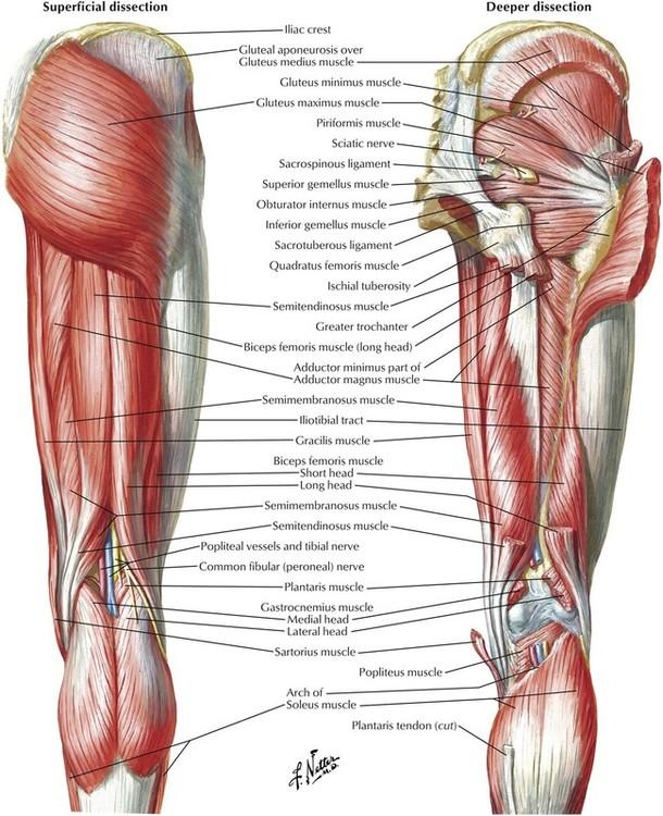 7 Lower Limb Basicmedical Key