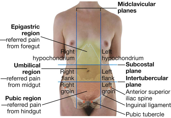 Be ing Oriented With The Human Body as well Ss Tissues Organ Systems Homeostasis Ch 4 besides 10125594 in addition Watch besides The Endocrine System General Functions Of Hormones. on body cavities and organs in them
