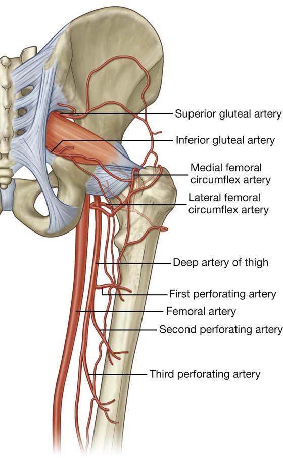 Lower Limb | Basicmedical Key