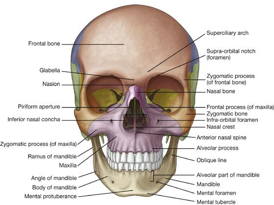 Bones of the Skull