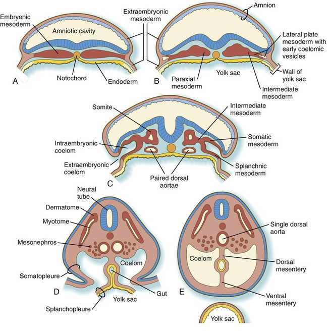 Spinal Column Cross Section Spinal Cord Anatomy Parts And