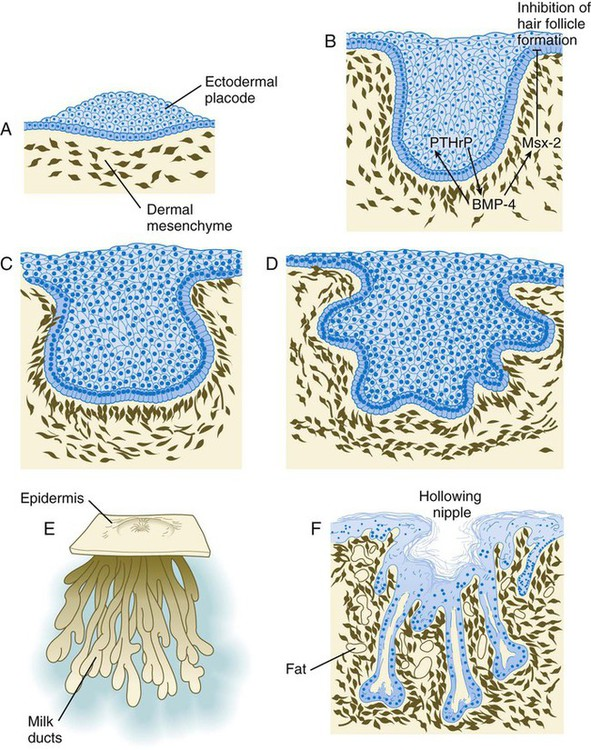 integumentary skeletal and muscular systems