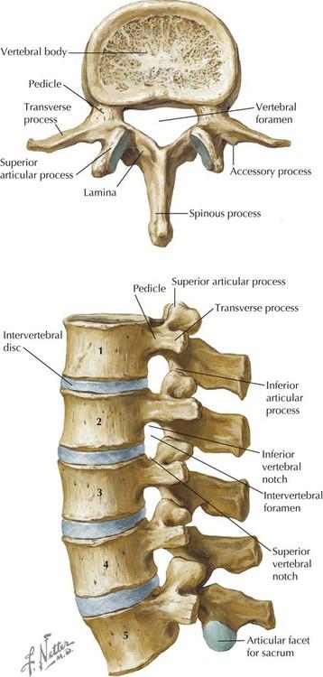 Back | Basicmedical Key