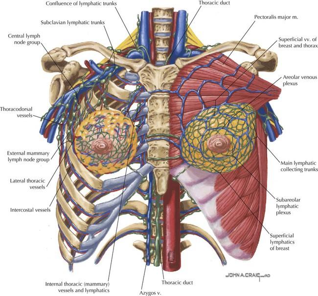 Thorax Basicmedical Key