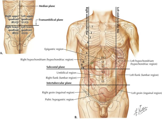 Abdomen basicmedical key figure 4 2 four quadrant a and nine region b abdominal planes from atlas of human anatomy ed 6 plate 244 ccuart Choice Image