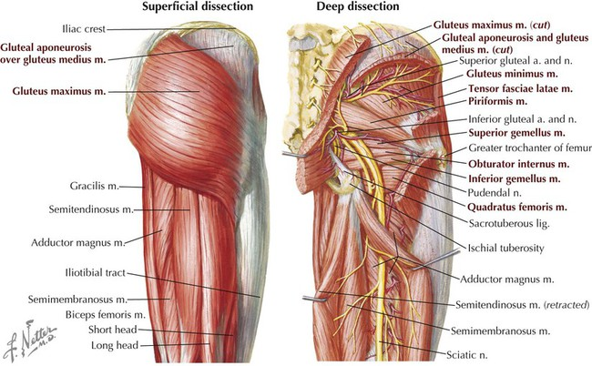 Lower Limb Basicmedical Key