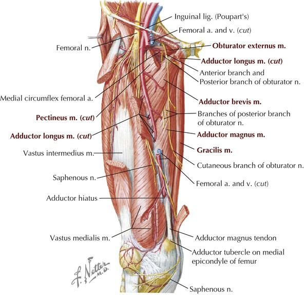 Lower Limb Basicmedical Key