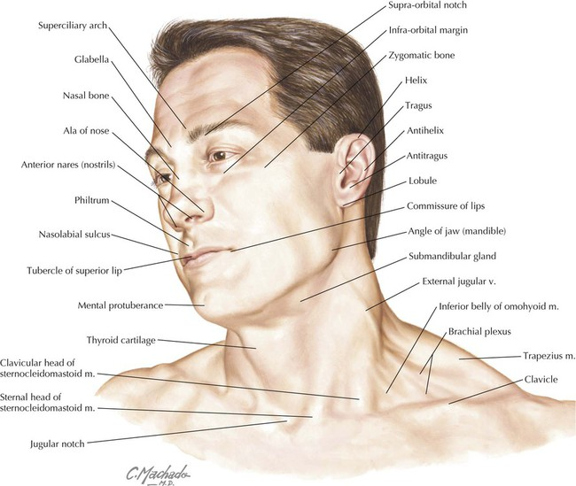 Head and Neck | Basicmedical Key